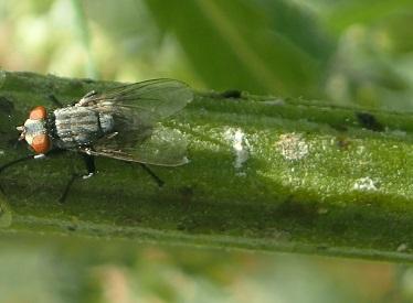 Hemp Insect Factsheets - Hemp Insect