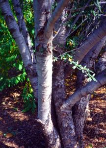 Superior Woody Plants Landscape Plants