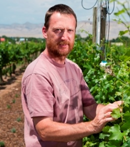 Colorado State University professor of viticulture Horst Caspari inspects wine grape vines growing in the Western Colorado Research Center?s Orchard Mesa site vineyard.